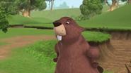 Beaver in MFTAP