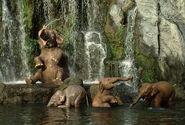 Jungle-Cruise-Elephants