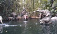 Jungle-Cruise-elephant-bathing-pool-620x370