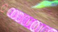 Bio-rhymic blast 613 + infinite echo