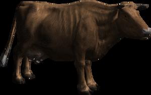 Fragola, la mucca