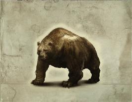 Bear in TWAG.png