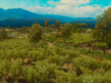 Coronata Vineyard