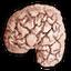 Fojtólidérc agy
