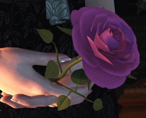 Tw3 Iris rose.png