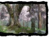 Bosco dei druidi