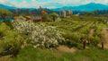 BaW vermentino vineyard.jpg