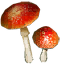 Tw2 ingredient cortinarius.png