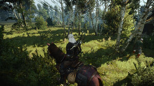 Witcher 3 Vulpine Woods (2).jpg