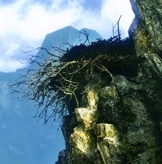 Harpy lair