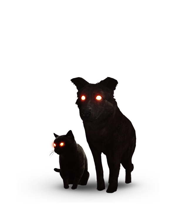 The Black Cat And Dog Witcher