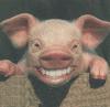 Smiling Pig.png