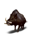 Tw3 journal wild boar.png