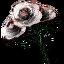Tw3 questitem q705 white roses.png