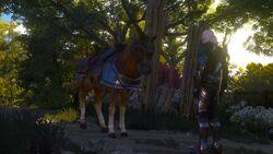 Tw3 baw equine phantoms (3).jpg