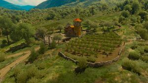Tw3 baw hortense vineyard (1).jpg