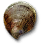 Tw3 shell.png