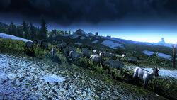 Tw3 screenshot goats.jpg