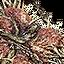 Tw3 character icon treespirit.png