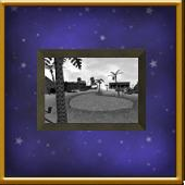 Framed Oasis Photo