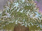Kelvin, the Ice Tree