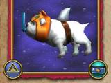 Ψεύτικο Σκυλόψαρο