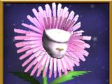 Ροζ Πικραλίδα