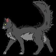 Graystripe Warrior