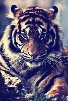 Ac6e5f1df80e8fe03c92d13a803886e2--spirit-animal-adorable-animals.jpg