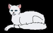 Cloudtail elder