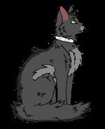 Graystripe Kittypet