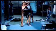 Wolfblood Season 3 Trailer