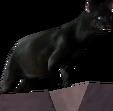 2.7 townhall cat