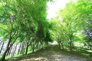 Wolmyeongdong-hiking-trail-6