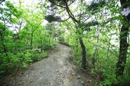 Wolmyeongdong-hiking-trail-7