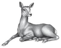 Illustration Lou 1