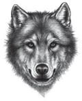 Illustration Wolfskopf