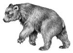 Illustration Berta 1
