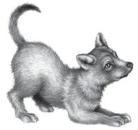 Illustration Miro