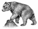 Illustration Berta 2