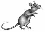 Illustration Nell