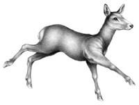 Illustration Lou 2