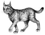 Illustration Arula
