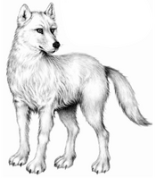 Illustration Tikaani 1