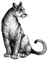 Illustration Carag 1