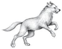 Illustration Tikaani 2