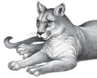Illustration Carag 3