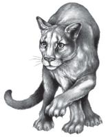 Illustration Carag 2