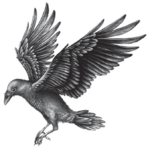 Illustration Wing