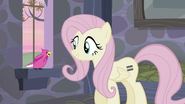 The bird communicating with Fluttershy S5E02